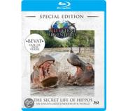 Natuur & Dierenleven Jules Verne - The secret life of hippos