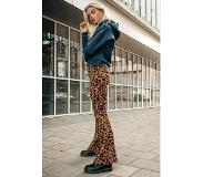 Colourful Rebel Leopard Print Flare Pants