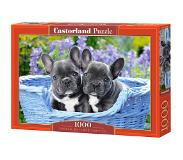Castorland French Bulldog Puppies - 1000 stukjes
