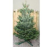 Warentuin Collection Kerstboom Warentuin Nordman A - kwaliteit Abies Nordmanniana 175 - ...