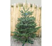 Warentuin Collection Kerstboom Warentuin Nordman B - kwaliteit Abies Nordmanniana 150 - ...
